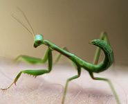 Beginners Guide to Photographing Insects