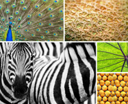 Theme Vote - Patterns In Nature
