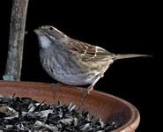 Bird Photography Simplified