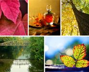 Theme Vote - Autumn Colors